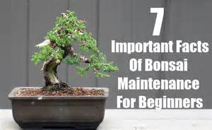 Organize Your Life 7 important facts of bonsai maintenance for beginners