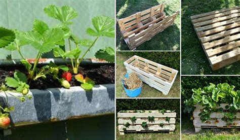 Strawberry Garden Ideas Creative Diy Ideas For Growing Strawberries On Small Garden Or Yard Amazing Diy Interior