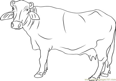 banni buffalo coloring page free buffalo coloring pages