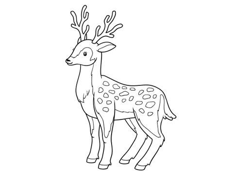 imagenes para colorear venado dibujo de un ciervo joven para colorear dibujos net