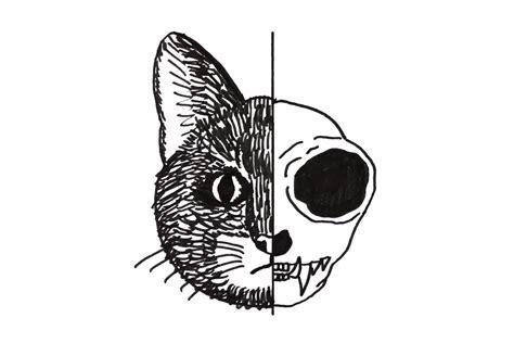 katze hat immer weichen stuhl schr 246 dingers katze