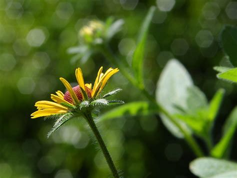 free flower images and stock photos free stock photo in high resolution flower macro flowers