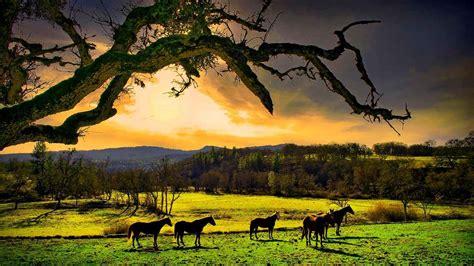 imagenes relajantes en 3d paisajes naturales para fondo en hd gratis 25