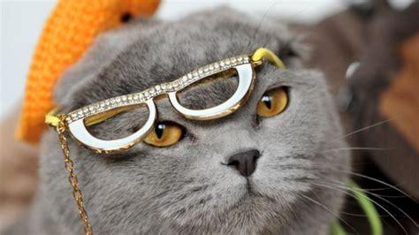 Show Me Your Cat Eye 5 by 치명적 외모 그리고 치명적 유전자 결함 1boon