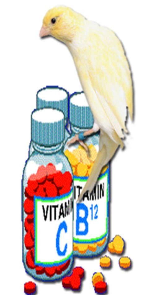 Vitamin Untuk Kenari Tentang Burung Di Indonesia Vitamin Untuk Kenari