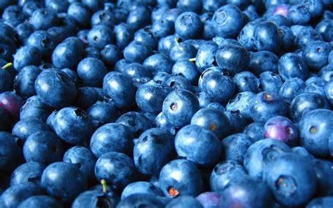 wallpaper blue food wed 16 dec cet 2015 blueberries food and drink image