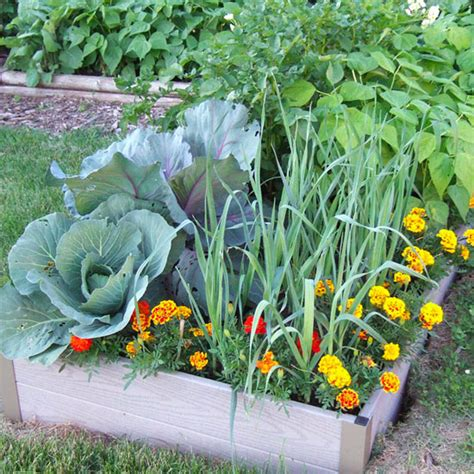 cool small palnts to grow when to plant vegetables