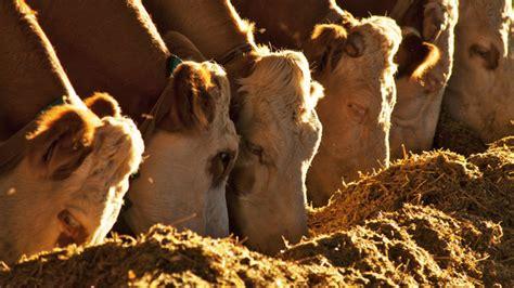 alimentazione animale alimentazione animale dibattito su futuro settore