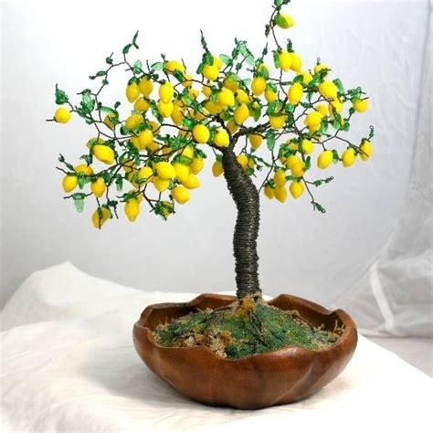 come potare un limone in vaso come curare un bonsai di limone fare bonsai curare un