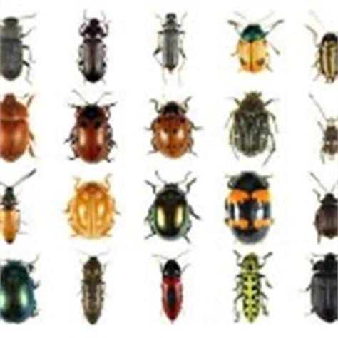 sognare insetti volanti dizionario dei sogni i sognipedia it