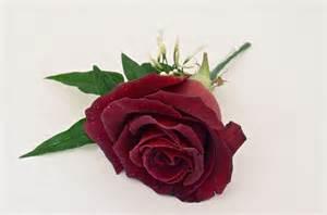 Wrist Corsage Ideas Wedding Flowers Blog March 2012