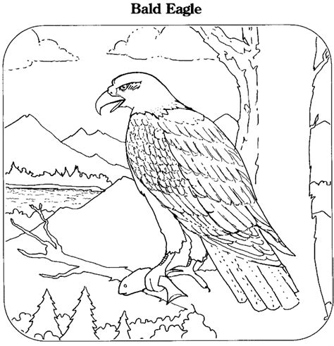 bald eagle coloring pages free bald eagle catching fish coloring page sketch coloring page