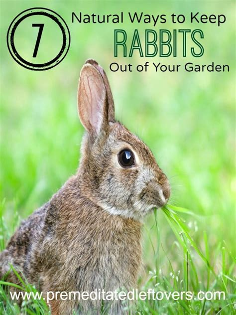 how to keep rabbits out of your backyard keep rabbits out of your fall garden vegetable gardener