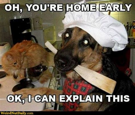 Oh You Dog Meme - funny pictures weirdnutdaily dog quot chef quot