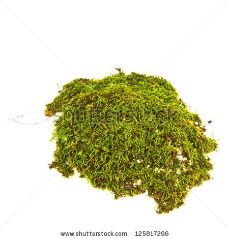 moss clipart clipground