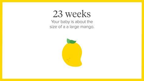 fruit 23 weeks pregnancy calendar a week by week guide