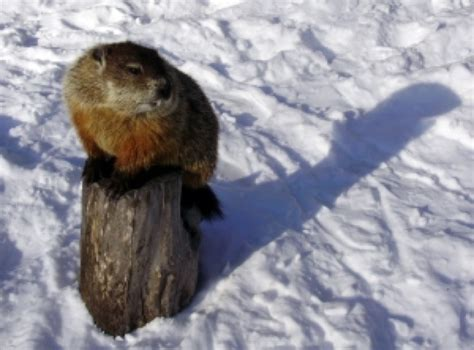 it s like groundhog day meaning the story of the groundhog and his shadow welcome to
