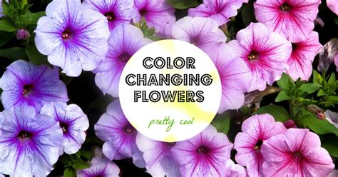 color changing flowers indiegogo