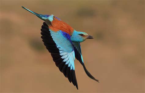aves de europa todas las aves europeas en 1700 ilustraciones libro gratis descargar 302 found