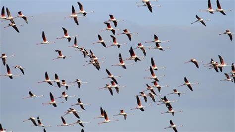 imagenes de animales que migran aves que migran por marruecos una se 241 al para estudiar el