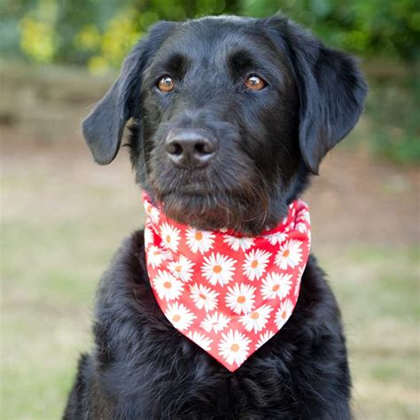 dogs in bandanas in prints redhound for dogs