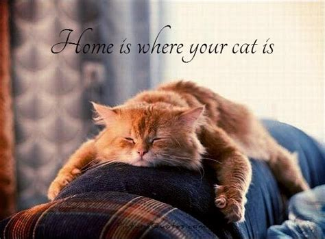 design works home is where the cat is cute quotes cute sayings cute picture quotes page 2