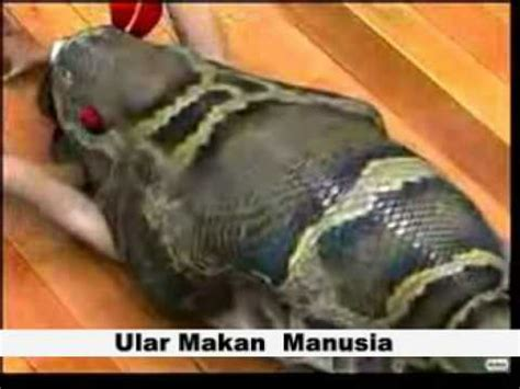 youtube film manusia ular ular makan makan manusia part 1 youtube