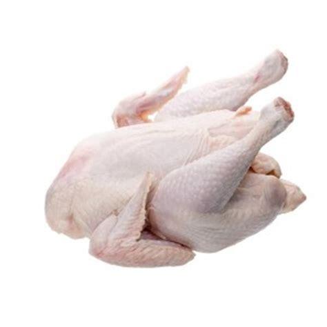 Ayam Potong kiat memulai bisnis ayam potong bimbingan