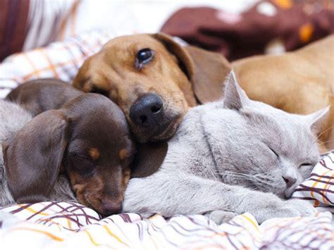 wie lange schlafen neugeborene wie lange schlafen katzen und hunde