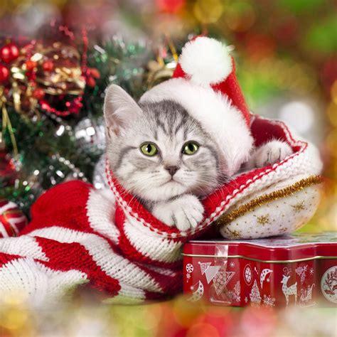 imagenes animales navidad consigue un iphone o ipad navide 241 o con los mejores wallpapers