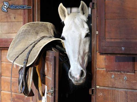 stall pferd stall