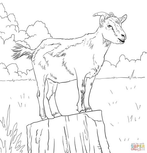 goat coloring pages realistic domestic goat coloring page free printable