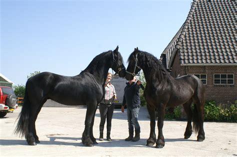 zum kaufen pferde wallach tieranzeigen