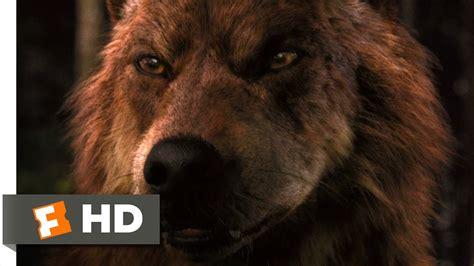 Saga Of The Wolf jacob wolf and renesmee www pixshark images