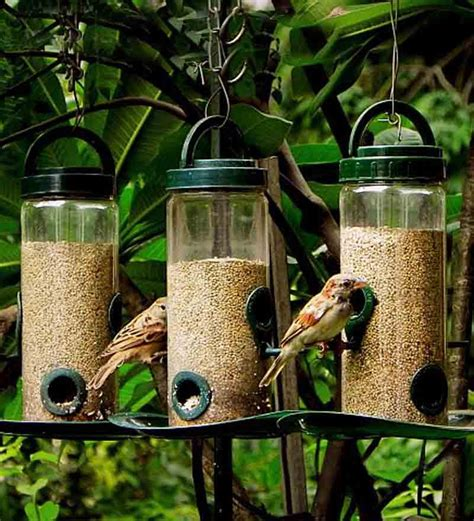 Where To Buy A Birdhouse Bird Feeders Food Where To Buy