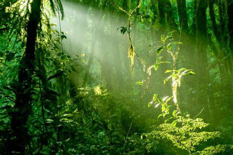 brasilien costa rica billeder costa rica fotos fra brasilien pr 230 senteret af