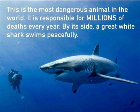 what is the most dangerous the most dangerous animal in the world