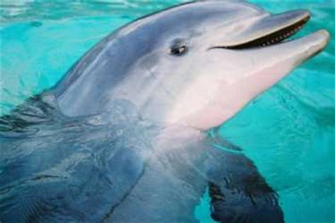 Stinger Detox Near Me by Dolphins The Earth Times
