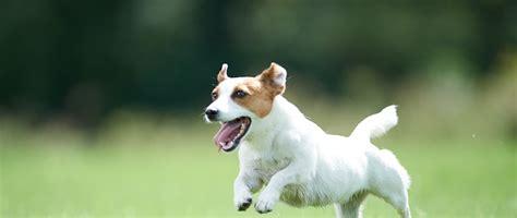 alimento per cani alimento secco per adulto di taglia piccola e media