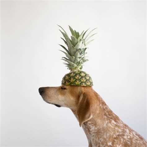 is pineapple for dogs pineapple