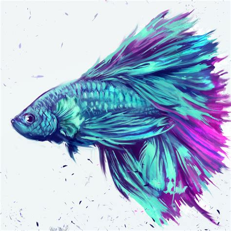 betta splendens by shimhaq98 on deviantart