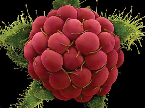 fruit a microscope fruits and veggies the microscope discovermagazine