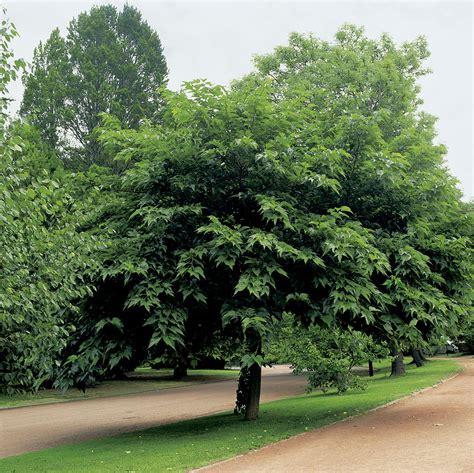 fruitless y morus alba kagayamae viveros ver 243 n frutales y ornamentales