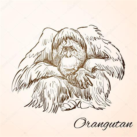 doodle orang doodle orang oetan stockvector 169 netkoff 80741960