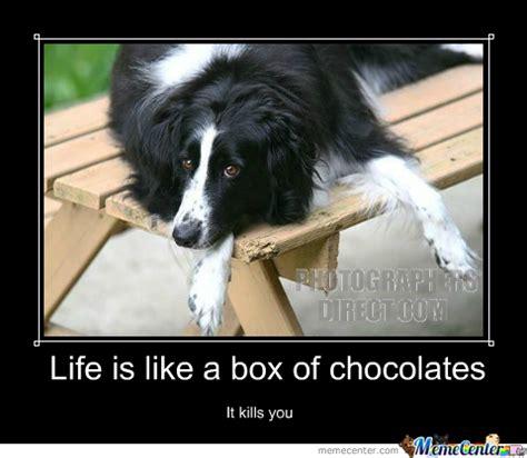 Life Is Like A Box Of Chocolates Meme - life is like a box of chocolates by embeddedneedles meme center