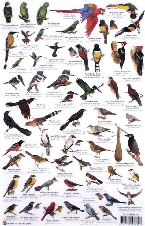 Field Guide  Belize Birds