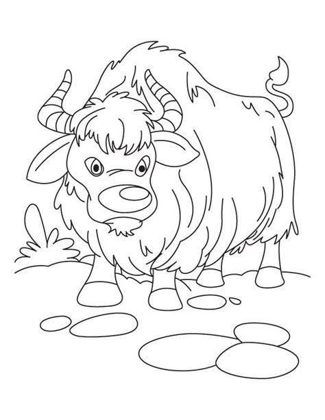 coloring page of a yak 7 best yaks images on pinterest animal drawings art