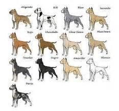 pit bull colors dogs on pitbulls pitbull and pit bull