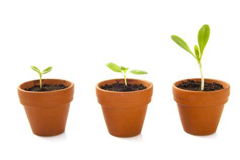 coltivare ortaggi in vaso come fare l orto biologico orto da coltivare