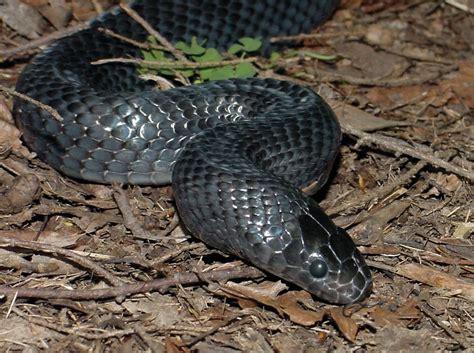 Types Of Garden Snakes by Snakes Classes The Cincinnati Zoo Botanical Garden